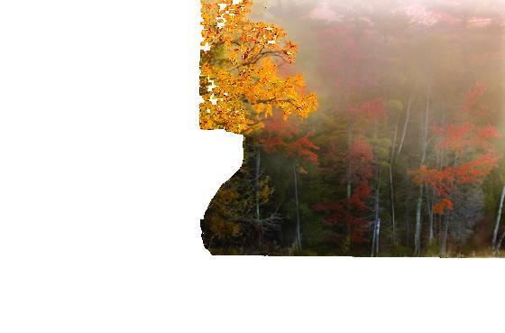 Autumn_mist