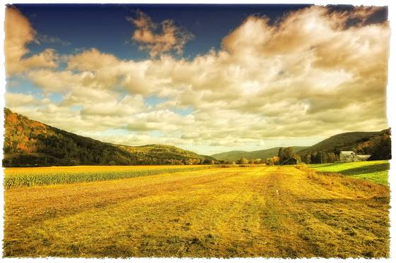 Roxbury_autumn_field