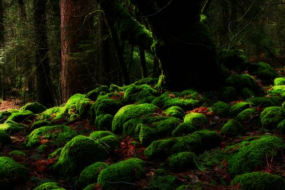 Moss covered tree and rocks