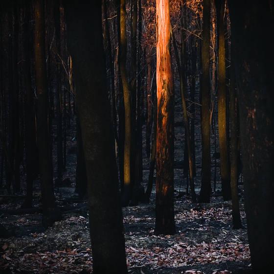 Burnt_3