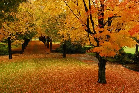 Fall_welcome