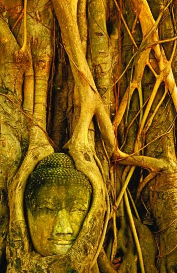 Buddha_tree