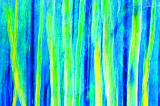 Aspen_trees