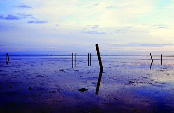 Pilings_at_sunrise