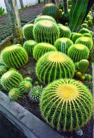 Cactus_nursery