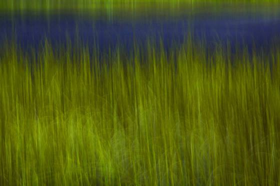 Roadside_grasses