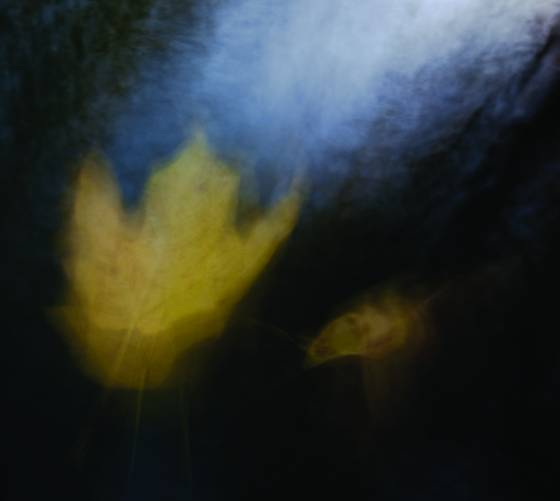 Leaf_abstraction_no__10