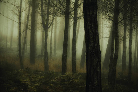 Into_the_woods_3