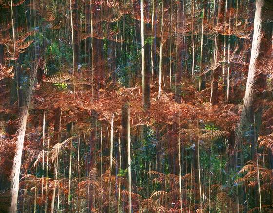 The_multiplied_forest__21