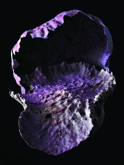 Fungus_2