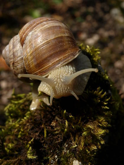 Mr__snail