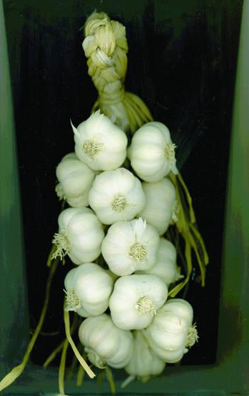 Garlic_garland