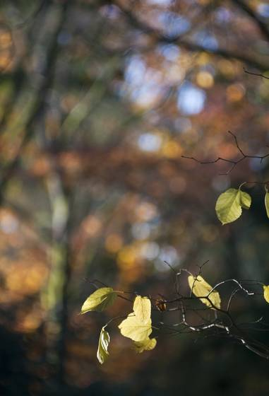 Autumn_bokeh
