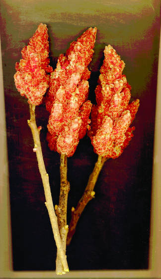 Sumac