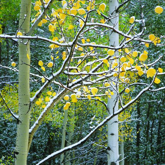 Aspen_study_2