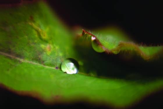 Leaf_droplet
