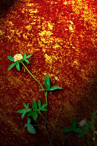 Rust___flower