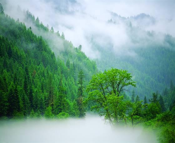 Lochsa_river