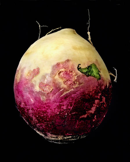 Portrait_of_a_turnip