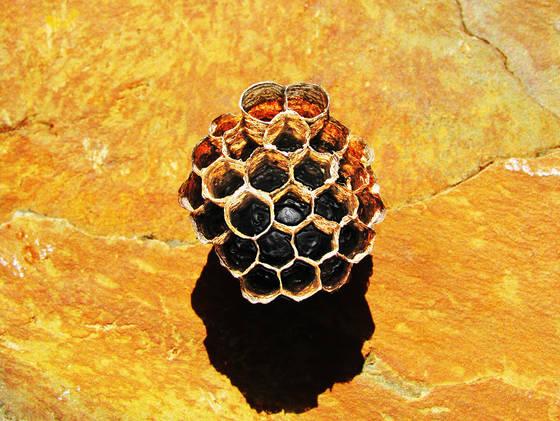 Wasp_nest