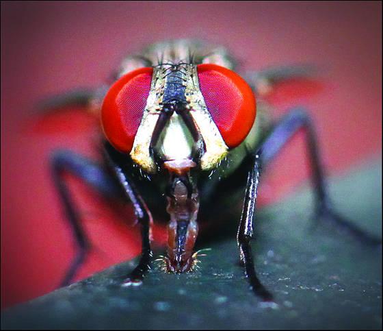 Fly_s_eyes