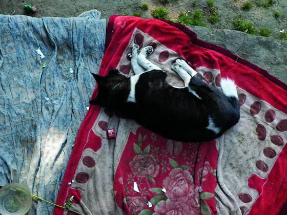 Dog_nap