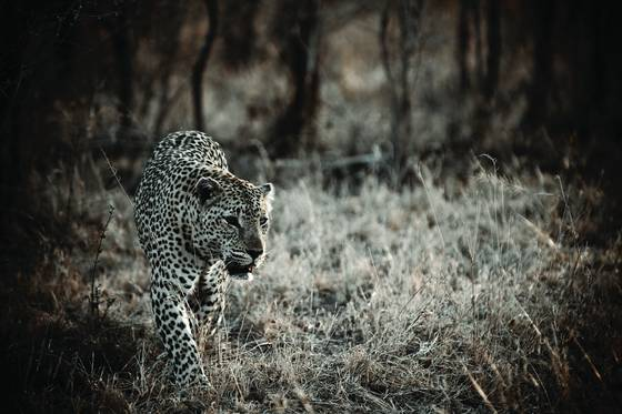 On_the_prowl