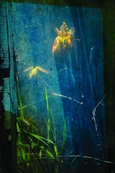 Weeds_and_junk