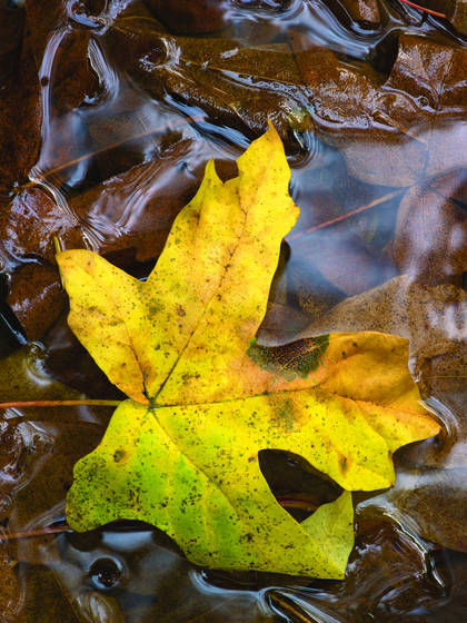 Leaf_and_stream_reflections