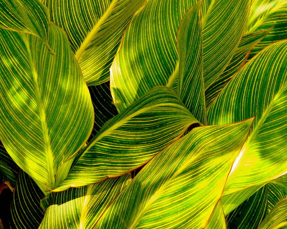 Waves of green  2
