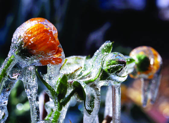 Frozen__flower_4