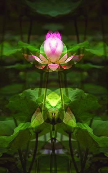 Lotus_offering