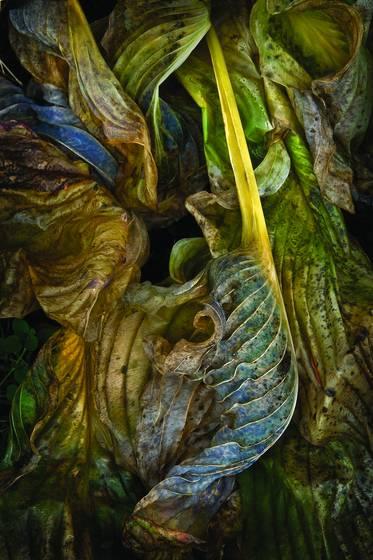 Baroque_leaf