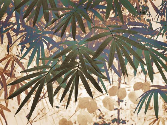 Bamboo_1