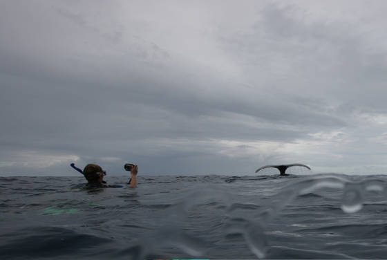 Swimming_with_humpback
