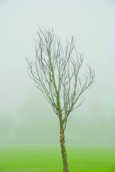 Fog_tree