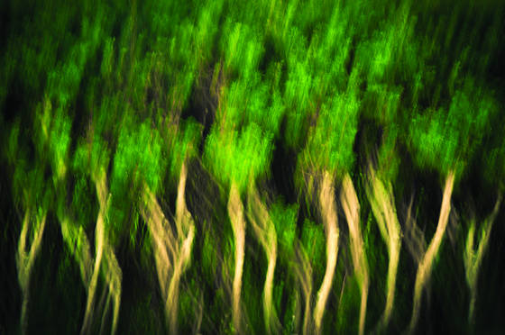 Hedge_impression