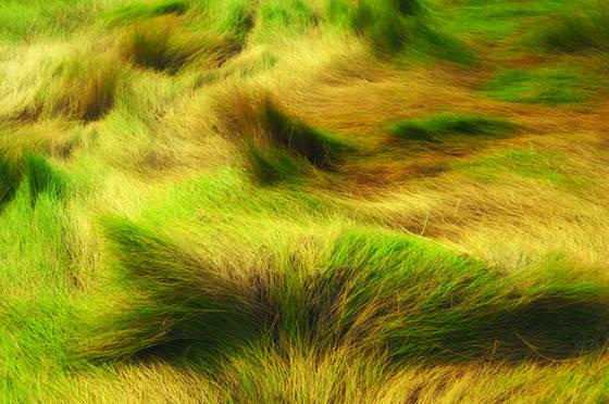 Marsh_grasses