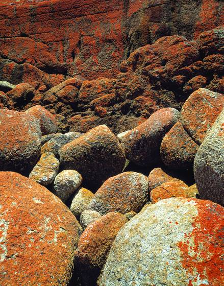 Lichen_and_rocks