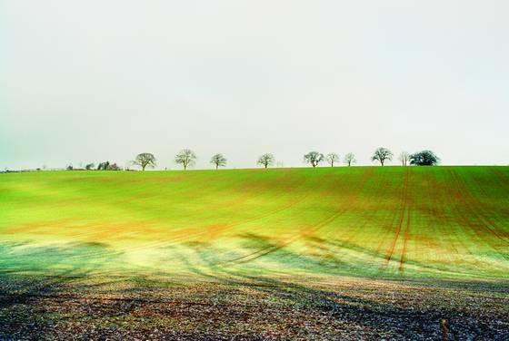 Open_field