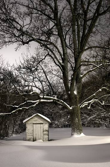 Shed_in_winter