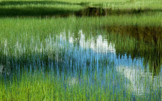 Marsh_grass