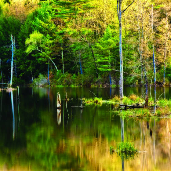Spring_reflection