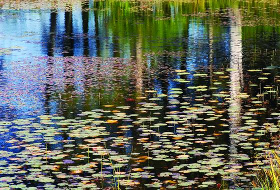 Floating_garden