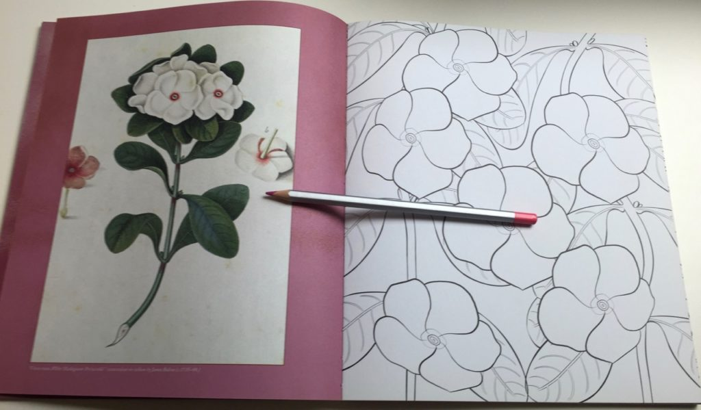 The book contains 45 floral coloring pages to colour