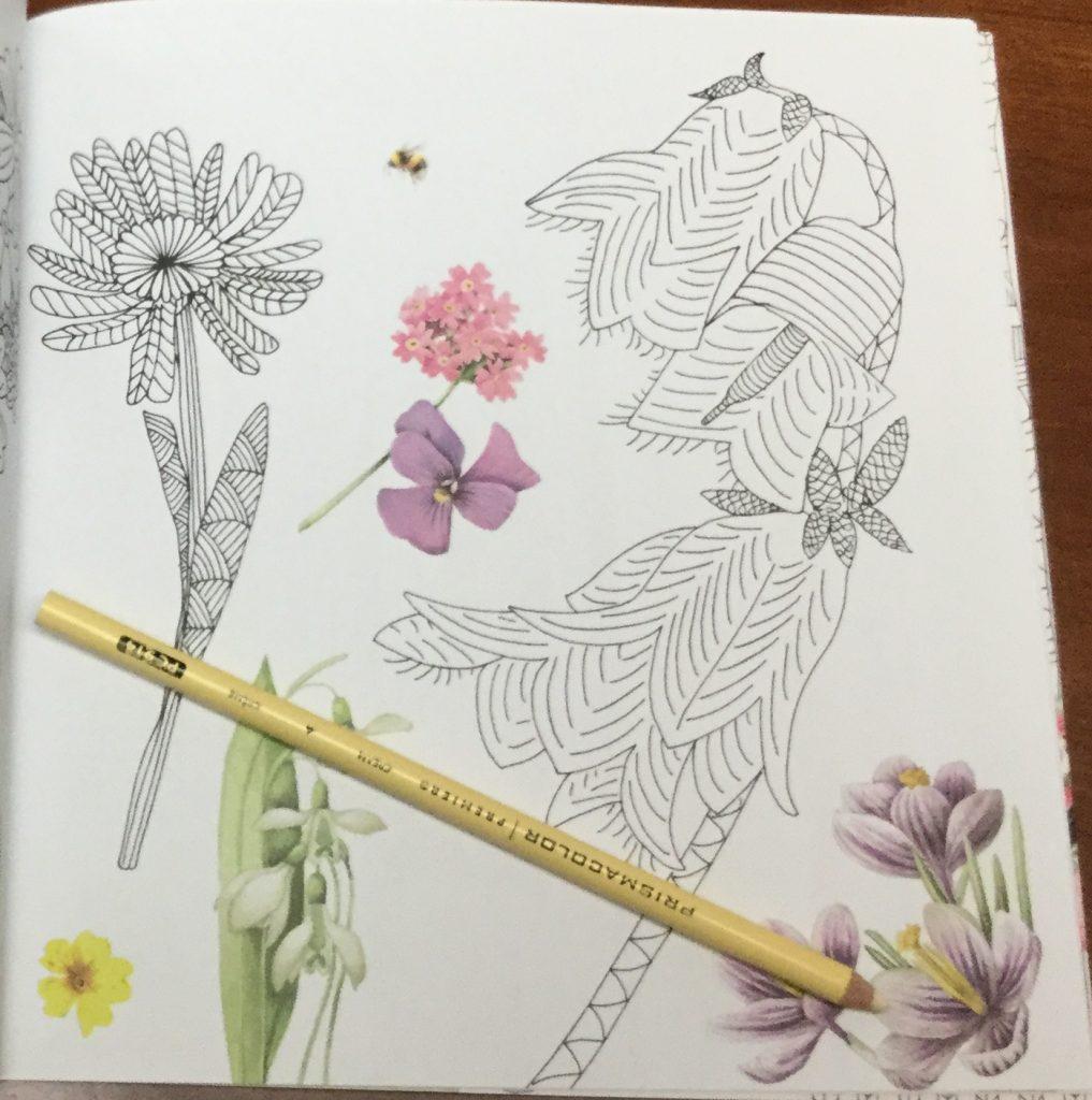 Zauberhafte  1439 1 1017x1024 - Meine Zauberhafte Natur  (My Magical Nature) Coloring Book Review