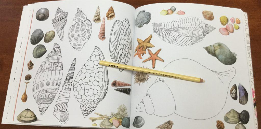 Zauberhafte 1438 1024x507 - Meine Zauberhafte Natur  (My Magical Nature) Coloring Book Review