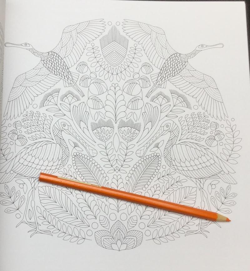 Beautiful Birds And Treetop Treasures Coloring Book Review