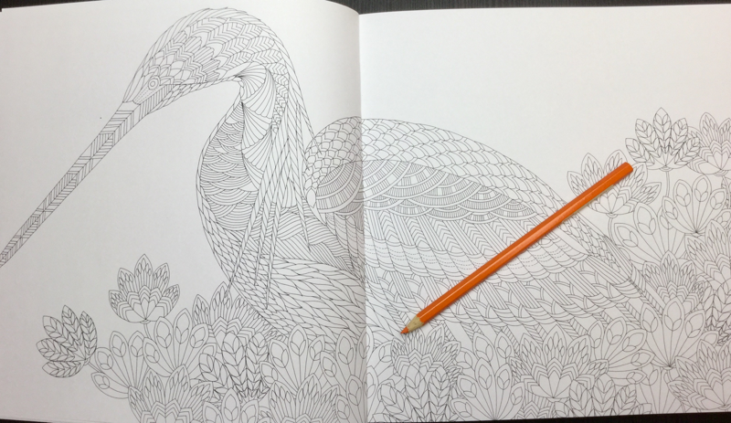 Beautiful Birds And Treetop Treasures Coloring Book Review