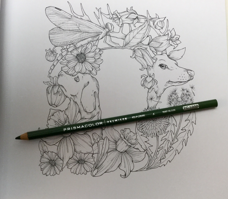 a to z flora fauna coloring book 4502 - The A-Z of Flora and Fauna -  Coloring Book Review